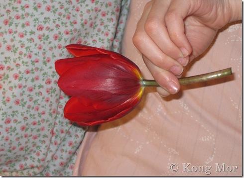 Kommunal tulipan